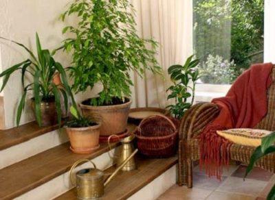 Як прикрасити інтер'єр квартири кімнатними рослинами