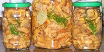 соленые лисички на зиму рецепты фото